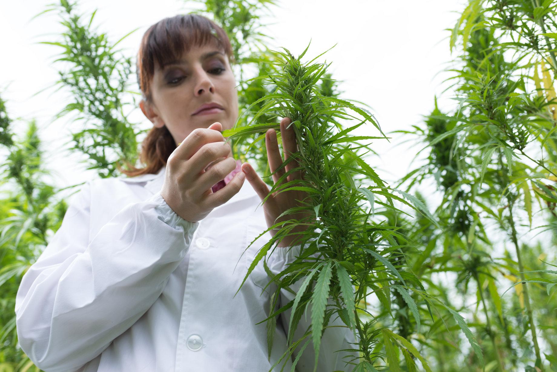Forsker der checker hamp planter